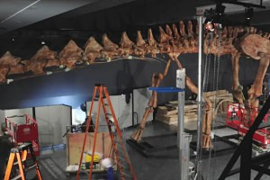 A Giant Dinosaur Enters the Museum of Natural History in New York