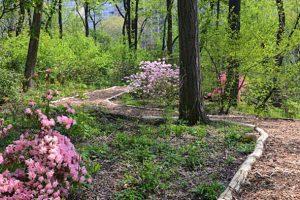 Visit the hidden forest of Central Park