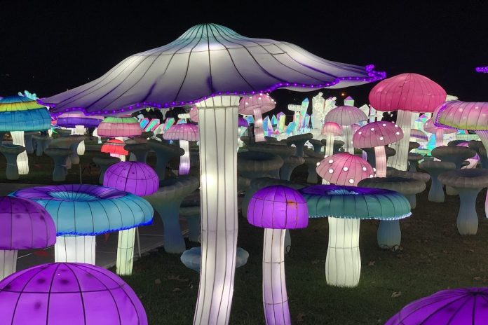 Luminocity mushrooms
